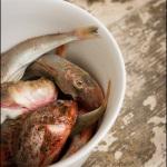 Fotografija hrane - Janez Marolt - FAO 37.2.1. Klemen Košir